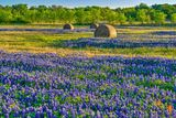 Texas bluebonnets, hay bales, indian paintbrush, rural texas, field of haybales, wildflowers, landscape