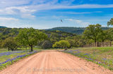 bluebonnets, Texas Hill Country, blue bonnets, dirt road, hills, fence, trees, blue sky, Texas flowers, texas wildflowers, landscape, landscapes, bird, texas wildflowers, springtine, spring, spring fl