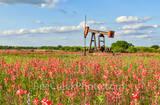 indian paintbrush, oil derrick, oil well pumper, wildflowers, San Antonio, pumpers, industrial, Texas wildflowers, images of texas, texas industrial, oil rig,