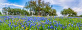 wildflower, wildflowers, bluebonnets, pano, panorama,  texas wildflowers, texas bluebonnets, perky sue, yellow, blue, trees, texas hill country, hill country, blue sky, images of texas, pictures of te