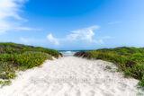 Wildflowers Beach Path Through the Dunes