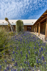 Big Bend State Park, bluebonnets, visitor center, texas, state flower,