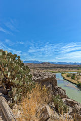 Canyon Overlook, Rio Grande River, Santa Elena, cactus, landscape, prickly pear, vertical, view