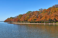 cypress, colorful, fall, fall colors, colorful, trees, autumn, rusty, orange, reds, banks, scene, scenery, wilderness, blue sky, forest, Lake Nimrod, arkansas, blue sky, cypress stumps, fall foliage,