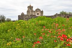 Presidio Goliad, Presidio La Bahi, wildflowers, texas wildflower, indian paintbrush, yellow daisy, Battle of Goliad,Fannin, Mexico, Spainish, historic, catholic church, mission, missions, spanish, for