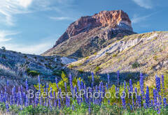 Big Bend National Park, image of bluebonnets, Cerro Castillian, mountains, desert, big bend, texas bluebonnets, Big Bend Bluebonnets, Big Bend Lupine, Havard Bluebonnet, Chisos Bluebonnet, lupine,