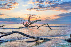 Driftwood in the Surf