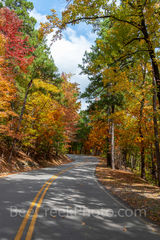 fall, autumn, yellow, orange, pine, cypress, trees, shades, yellow, orange, rust, colors, fall color, Tower Mountain, road, arkansas, national, forest, october, curves, sun light, tree line road, pin