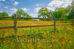 wildflowers, fence, texas hill country, field of texas wildflowers, hill country, indian blanket, red, bear foot, aster, yellow, wildflower landscape,  landscape, natural, spring, blue sky, clouds, na