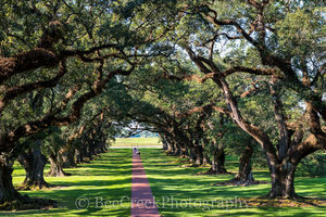 Lousiana, National Historic Landmark, Oak Alley, big house, branches, landscape, landscapes, mansion, mississippi, oak trees, people, plantation, sidewalk, slaves, sugar cane, sunset