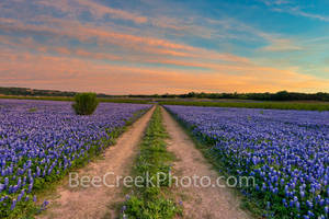 Bluebonnets, bluebonnet, blue bells, blue bonnets, sunset, colorful sky, Muleshoe Bend Park, river bluebonnets, Texas bluebonnets, bluebonnets in texas, field of bluebonnets, bluebonnets landscape,