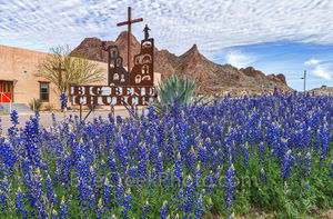 bluebonnets, big bend church, texas wildflowers, images of bluebonnets, texas bluebonnets, Big bend bluebonnets, Terlingua, Study Butte - Terlingua, west texas, usa,