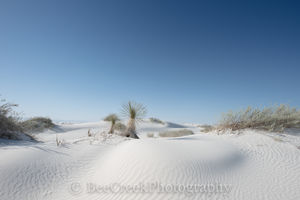 Alamagorda nm, New Mexico, New Mexico Parks, White Sand National Monument, Yucca in White sands, beautiful photos of white sands, dunes, flow of sand, gypsum, images of White Sands, magnificent white