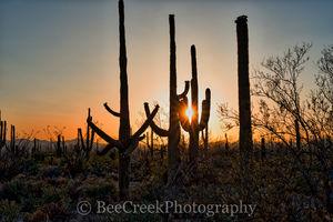 Saguaro, sunset, sunsets, sun set, Arizona, Tucson, plant, cactus, cacti, desert southwest, landscape, landscapes, desert, desert southwest,