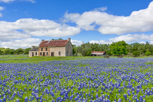bluebonnets, stone house, farm house, texas hill country, blue sky, white clouds, day,