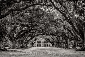 Oak Alley, BW, black and White, Louisiana, trees,