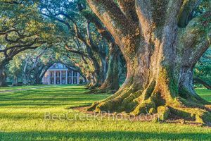 Lousiana, Oak Alley, Sunrise, big house, branches, mansion, oak trees, plantation, roots, sidewalk, slaves, sugar cane