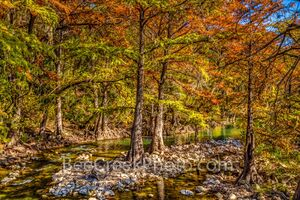 texas, texas hill country, guadalupe river, fall, autumn, fall scenery, river, cypress trees, bald cypress, cypress, yellow, orange, red, rust, rocks, rapids, flowing, reflections, channels, tubing, t