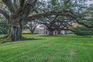 Oak Alley, Oaks, plantation, trees