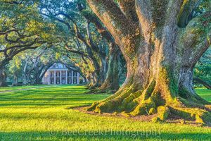 Louisiana Landscapes Prints and Images