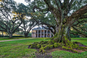 Lousiana, National Historic Landmark, Oak Alley, Sunrise, big house, branches, mansion, morning light, oak trees, plantation, sidewalk, slavesmississippi, sugar cane