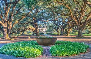 Louisiana, National Historic Landmark, Oak Alley, Sunrise, big house, branches, mansion, mississippi, oak trees, plantation, sidewalk, slaves, sugar cane