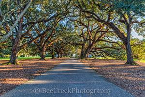 Lousiana, Oak Alley, big house, branches, mansion, oak trees, plantation, sidewalk, slaves, sugar cane, sunset