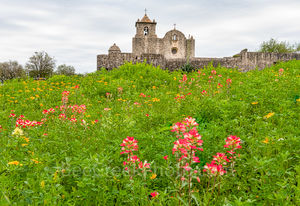 Presidio La Bahi, Presidio Goliad, landmark, wildflowers, texas wildflowers, indian paintbrush, yellow daisy, spring, springtime, floral, flowers, scenic, Goliad Texas, Fort goliad, mission, landscape