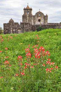 Presidio La Bahi, Presidio Goliad, wildflowers, indian paintbrush, daisy, historic, catholic church, mission, missions, spanish, fort, vertical, tall, texas revolution, battle of Goliad, yellow daisy