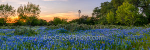 texas bluebonnets, sunset, texas hill country, cactus, prickly pear, windmill, hill country, landscape, texas scenery, pictures of texas bluebonnets, wildflowers, texas bluebonnets, texas wildflowers,