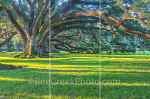 Live Oak, trees, oak trees, plantation, landscape, sunrise, trptych, three panel split image, slavery, seven oaks, landscape, plantation, mansion, river road, bowing oaks, oak valley, famous, sugar ca