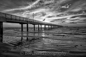 Coastal Pier, bird, black and white, bw, clouds, gulf coast, sand, sea gull, sun sunrise, surf