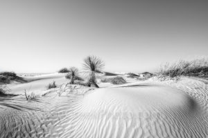 White Sands Dunes, New Mexico, Alamagorda nm, sand dunes, desert landscape, image of new mexico, pictures of sand dunes, southwestern, us, yuccas, soft, white, gypsum, blue skys, landscape, scenic, de