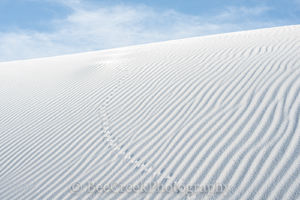 White Sands, landscapes, Alamagorda nm, Animal tracks in the sand dune, New Mexico, New Mexico Parks, White Sand National Monument, beautiful photos of white sands, dunes, flow of sand, gypsum, images