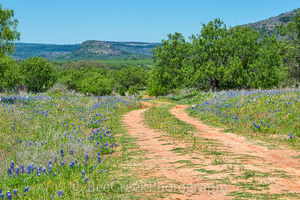 bluebonnet, landscape, dirt road, Texas, Texas Hil Country, wildflowers, rural,  rural landscape, scenic landscape, road,