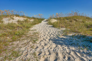 beach, sea oats, dunes, beach, sea grasses, dunes, ocean, surf, georgia coast, coastal, seascape, jekyll island, sand, grasses, ocean, surf, coast, sea, east coast, georgia, golden isles, barrier isla