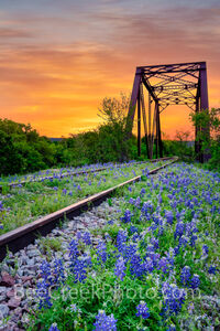 bluebonnet, texas bluebonnets, railroad tracks, tressel,  sunrise, texas hill country, bluebonnets, colorful sky, orange, orange sky, hill country, train tracks, sunset, vertical