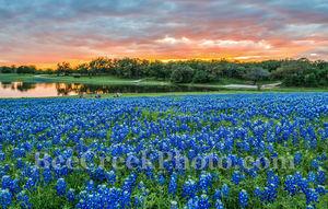 Bluebonnets, bluebonnet, sunset, sunsets, colors, oranges, pinks, reds, sky, colorful, blue bonnets, wildflowers, wildflower, Colorado River, landscapes, landscape, water, Texas flowers, Texas, flora,