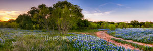texas bluebonnets, texas wildflowers, pictures of bluebonnets, indian paintbrush, wildflowers, texas hill country, texas, blue bonnets, hill country, shadows, road, mesquite, golden glow, sunset, tree