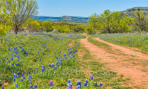 Bluebonnets, Willow City Loop, Texas hill country, dirt road, wildflowers, hills,