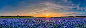 Bluebonnets, sunset, landscape, Austin tx, field, flowers, wildflowers,, texas bluebonnets, bluebonnets in texas, texas, field of bluebonnets, blue bells, clouds, panorama, panos,