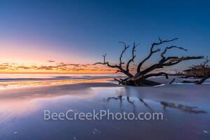 Georgia Coast and Botany Bay South Carolina