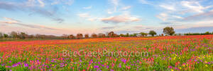 wildflowers, texas wildflowers, bluebonnets, indian paintbrush, yellow daisys, phlox, texas, central texas, south texas, floral, flowers, plants, colorfuwildflowers, backroads, pano, panorama, vibrant