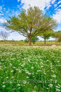 Field of Daisy Wildflowers Vertical