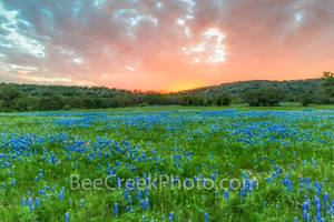 bluebonnets, sunsets, field, field of bluebonnets, blue bonnets, fiery sky, colorful, red, yellows, orange, purple, landscape, landscapes, Texas Hill Country, vivid, fiery, stunning,spring flowers, sp