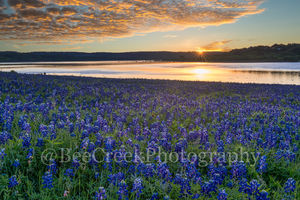 bluebonnet, blue bonnets, sunrise, golden glow, lake, landscape, field of bluebonnets, texas hill country, texas hill country, texas landscape, wildflowers, spring, Lady Bird, springtime, spring,