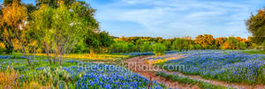 bluebonnets, indian paintbrush, wildflowers, texas hill country, texas, blue bonnets,hill country, shadows, light, road, mesquite, golden glow, green, blue, llano, sun, shadows, light, trees, curved r