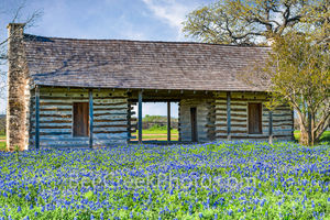 bluebonnets, blue bonnets, log cabin, historic, field, landscapes, wildflowers, images of texas, spring flowers, texas wildflowers,