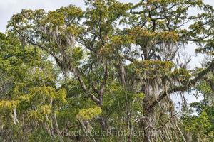 Louisiana, swamp, cypress tree, moss, landscape, landscapes,