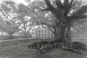 Oak Alley Plantation, black and white, bw,  misty, live oak trees, plantation oaks, slavery, deep south, southern, oak valley, seven oaks, mansion, big house, movies, Mississipp river, Vacherie, St Ja
